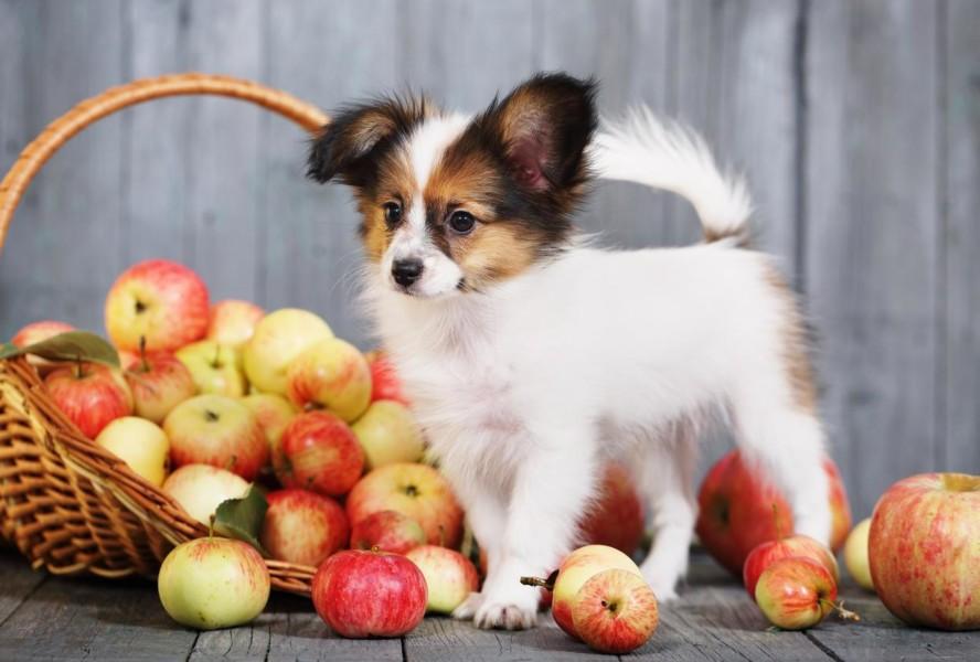 Quale frutta e verdura può mangiare il cane